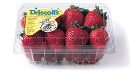 driscoll-berries-strawberries